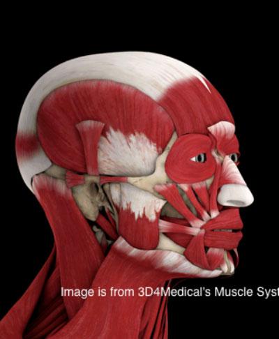 Douleur au muscle du visage