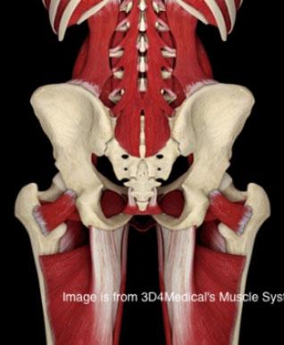 Douleur au muscle du sacrum ou à l'os iliaque